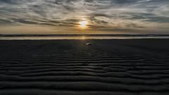 The jellyfish (Nederland in foto's) Tags: nederlandinfotos nederland netherlands nikon paulvandevelde pdvandevelde padagudaloma outdoorphotography outdoor natuurfotografie nature naturephotographer texel noordsea sun sunset beach decocksdorp landscape landschapsfotografie landschap sea sand sky water ocean