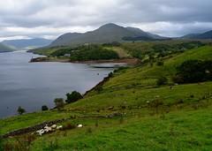 Sheepfarm @ Connemara Loop