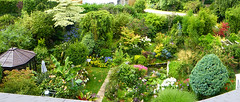Garden from the roof-room (Durley Beachbum) Tags: odc garden july bournemouth