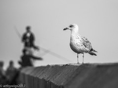 Chilling with the fishermen (Artbywigs) Tags: beach seascapes sussex wigs gull shoreham fishing fishermen bw