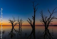 IMG_5453 (biglaptogs) Tags: barmera lakebonney riverland sa states sunsetsunrise