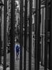 Publicada_Flickr66.jpg (wcíclope) Tags: boqueria barcelona streep