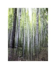 1625-2017 (thierry lathoud) Tags: forest forêt paysage tlala lathoudthierry icm