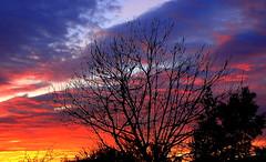 WINTER SILHOUETTES (Lani Elliott) Tags: nature naturephotography lanielliott sky skies cloud clouds trees silhouette silhouettes color colour colourful sunrise tasmaniansunrise wintersunrise scene scenic view tree treesilhouettes wow gorgeous brilliant