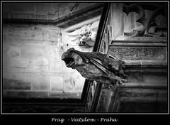 Gargoyles - 26 (fotomänni) Tags: prag prague praha gargoyles gargouille wasserspeier skulptur skulpturen veitsdom blackwhite schwarzweis noirblanc manfredweis