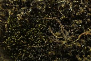 Macro mondays texture