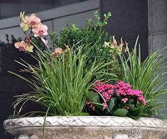 A Big Flower Pot (swong95765) Tags: pot flowers plants pretty building outdoors sidewalk accent