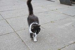 Cat at the stable (gill4kleuren - 14 ml views) Tags: kitty cat little young playing fun kat pet animal collage pussycat pussy poezen poes outdoor hair eyes mammal indoor people kitten