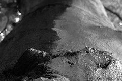 IMGP3557.jpg (Zeilenende) Tags: farbe baum rinde kontrast rosensteinpark stuttgart oberfläche stuttgartnord