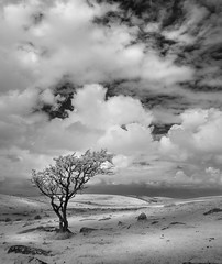 Isolation (Mick Blakey) Tags: slowexposure rugged cornish nature rocky moody tree boulders blackwhite solitude shadows solitary contrast moor cheesewring bobminmoor moorland moving silhoette black infrared monochrome cornwall clouds dramatic