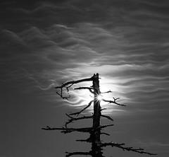 Reflections In Explore 25/07/2017 (paul.porral) Tags: lone tree silhouette sun arbre landscape sunrise nature sky ciel monochrome fire reflet reflection canon 7d minimalist