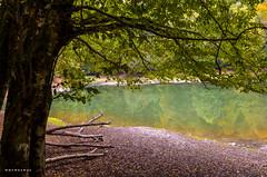 lake (whyweaway) Tags: bolu nature green tree yedigöller nikon hiking autumn lichen