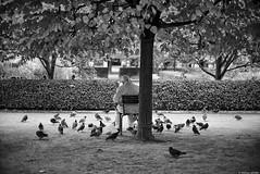 Le pigeon (Mathieu HENON) Tags: leica m240 nokton voigtlander 50mm monochrome noirblanc blackwhite france paris 1ier palais royal jardin pigeons