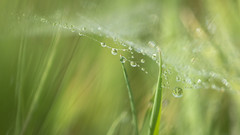 hidden worlds (Emma Varley) Tags: web grass raindrops droplets water refraction dreamy surreal abstract nature hidden world bokeh delicate hazy beauty
