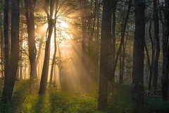 Crepuscular Effusion (Michael Rickard) Tags: rays sunlight sunrise godrays forest trees mountains pennsylvania