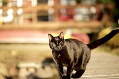 (Christian Webber) Tags: black cat cottage lake sun rise sunrise blackcat