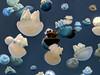 Various jellyfish in aquarium (hastuwi) Tags: jellyfish uburubur schypozoa cnidaria medusozoa animalia