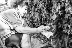 4 cani per strada (andaradagio) Tags: dog cane miglioramicodelluomo andaradagio canon 24mmf28canon nadiadagaro