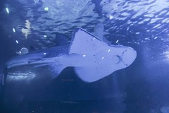 IMG_0630 (Lilly Wendel) Tags: newportaquarium newport kentucky usa