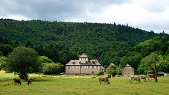 """Lieu dit """"St Gilles"""" (Philippe Haumesser (+ 8000 000 view)) Tags: nature arbre arbres tree trees forêt forêts forest forests ferme farmhouse vaches cows animal animaux prairie meadow pré stgilles alsace elsass france hautrhin 68 sonyilce6000 sonyalpha6000 sony 169 2017 rural ruralité"""