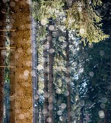 es schneit im Winterwald (GerhardStanke) Tags: schnee winter winterwald sauerland