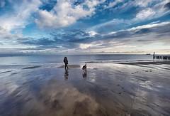 @the Beach in the morning (Marc Gommans) Tags: cadzandbad noordzee clouds reflection outdoor zeeuwsvlaanderen dog hund hond sam samsungs7edge lenscase wideanglelens sky dutch northsea roos summer