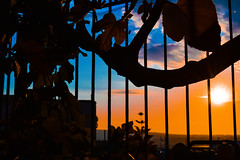 DSC_0932 (fisar.monica) Tags: napoli tramonti sunset naples murales streetart rain streetphotography lights