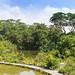 Panorama of Singapore's Botanic Garden