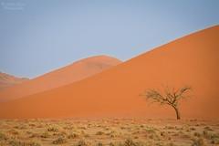 Namibia | Namib-Naukluft Desert (Nicholas Olesen Photography) Tags: namibia africa desert namib naukluft national park tree sand dune dunes brown red horizontal outdoors travel nikon
