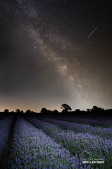Lavender & Starlight (macdad1948) Tags: stars astro nightscape starscape night milkyway somerset faulkland radstock lavender somersetlavendarfarm samyang14mm28
