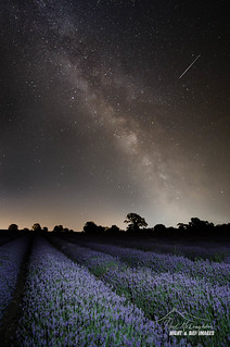 Lavender & Starlight