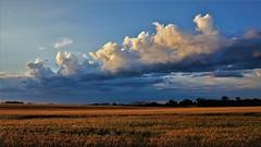 summer magic (BreezyWinter) Tags: summermagic summer july sky clouds fields gold weather storm rural morning wheatfields wheat nature light america landscape