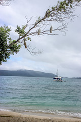 Cockatoo Shores (Alison Claire~) Tags: fitzroyisland queensland australia qld aus aussie down under travel travelling canon eos 600d eos600d canoneos canoneos600d alison lonsdale landscape nature outdoor outdoors green tree wild lightroom cockatoo native animal bird birding brid watching branch boat cruise yacht sand beach shore sea ocean water waves mountain island fitzroy tourism great barrier reef coral waterscape portrait