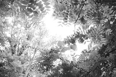 Nature Preserve (J.Bierwas) Tags: celery farm allendale nj new jersey nature photography xray black white bw leaves up