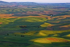 Afernoon in the Palouse (Alan Amati) Tags: amati alanamati america american usa us palouse thepalouse wa washington pacificnorthwest nw northwest steptoe steptoebutte butte colfax state park afternoon lateafternoon late light shadow farm farms barn field fields wheat spring sunset lush fertile hills rolling dimpled topography terrain landscape topf25