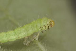 Caterpillar EF7A6047