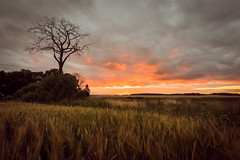 daybreak  (explored) (jan.wallin) Tags: tripod afsnikkor142428 uppsala sunrise nikond750 dawn uppsalalän sverige se sweden summer field tree early morning landscape