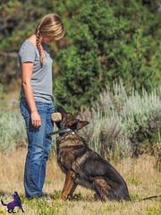 P7150348 (Songdog Studios) Tags: green dog neumond womensretreat 2017 k9 schutzhund ipo