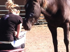 Equine-Therapy (39)