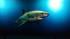 #sTe #acuario #inbursa (Thermick Studios) Tags: inbursa acuario ste