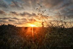 Desert Sunsets ... (Hazem Hafez) Tags: desert greenery sand sun sunset horizon plants clouds sky dark
