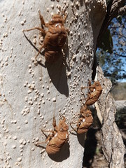 Broome Western Australia Dry Season (Robin Hutton) Tags: broome western australia sun sea sand camels long walks beach cicada chrysalis beetle