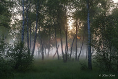 Wittmoor - 20061710 (Klaus Kehrls) Tags: landschaft natur wald moor nebel sonnenaufgang