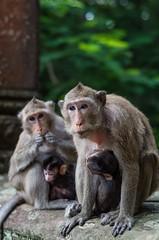 Monkey'in around! (penny-blog.com) Tags: chimp baby photography travel cambodia reap siem wat angkor temple wild wildlife animal monkey