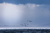 Sea birds (HarQ Photography (Staying in Australia 5/7-5/28)) Tags: sony a700 landscape bird sea sky