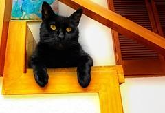 GATO DESCANSANDO EN EL DESCANSO DE LA ESCALERA (FOTOS PARA PASAR EL RATO) Tags: black escaleras negro gatos cat