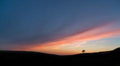 The last resort (John Lever Photography.) Tags: hulme upper district peak tree lone