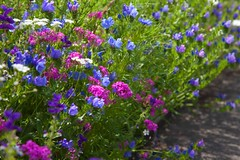 Garden Colours @ Horniman (Adam Swaine) Tags: londonparks parks gardens flora flowers colours summer england english london beautiful canon swaine multicolours uk horniman british seasons