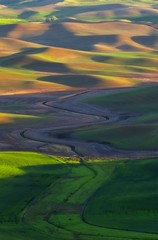 Palouse Stream (Alan Amati) Tags: amati alanamati america american usa us pacificnorthwest nw northwest palouse thepalouse washington wa field fields stream hills rolling rural agriculture farm farms wheat afternoon late light shadow landscape topography terrain meandering