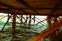 IMG_1157 (ahmed_Maher) Tags: egypt hurghada elgouna egyptian roadtrip sea redsea green blue colors marina wildlife details macro caribbean documentary thisisegypt